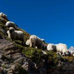 Im Aufstieg auf die Hörnlihütte - Schwarznasu